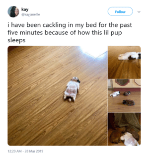 """thedegu: """""""" post-184486919655: kay  @kayjanellle  Follow  i have been cackling in my bed for the past  five minutes because of how this lil pup  sleeps  12:29 AM 28 Mar 2019 thedegu: """""""" post-184486919655"""