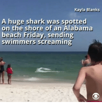 Friday, Memes, and Shark: Kayla Blanks  A huge shark was spotted  on the shore of an Alabama  beach Friday, sending  swimmers screaming Whoa 👀 repost via @cbsnews Beachgoers in Gulf Shores Alabama, ran to shore screaming after spotting a shark in shallow waters over the weekend.