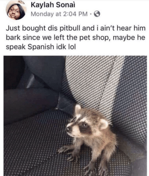 well that was a wild ride: Kaylah Sonai  Monday at 2:04 PM  Just bought dis pitbull and i ain't hear him  bark since we left the pet shop, maybe he  speak Spanish idk lol well that was a wild ride