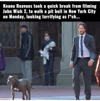 The woman in the background 😂 . @DOYOUEVEN 👈🏼 FREE SHIPPING ON ALL ORDERS 🌍🚚 ENDS TODAY! LINK IN BIO ✔️: Keanu Reavues took a quick break from filming  John Wick 2, to walk a pit bull in New York City  on Monday, looking terrifying as f*ck... The woman in the background 😂 . @DOYOUEVEN 👈🏼 FREE SHIPPING ON ALL ORDERS 🌍🚚 ENDS TODAY! LINK IN BIO ✔️
