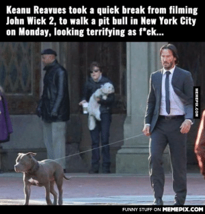 Always badass AF.omg-humor.tumblr.com: Keanu Reavues took a quick break from filming  John Wick 2, to walk a pit bull in New York City  on Monday, looking terrifying as f*ck...  FUNNY STUFF ON MEMEPIX.COM  МЕМЕРIХ.Сом Always badass AF.omg-humor.tumblr.com