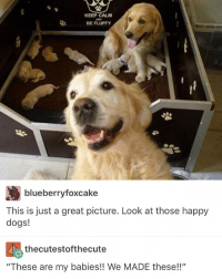 """Dogs, Love, and Memes: KEEP CALM  BE FLUFFY  blueberryfoxcake  This is just a great picture. Look at those happy  dogs!  thecutestofthecute  """"These are my babies!! We MADE these!!"""" I love dogs @idiosyncrat"""