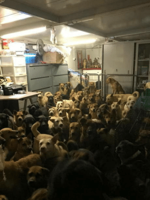 Keep doges safe during typhoon in Hong Kong: Keep doges safe during typhoon in Hong Kong