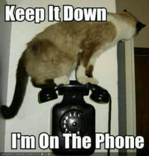 : Keep It Down  I'm On The Phone