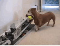 Funny, Dog, and Day: keep your dog busy all day