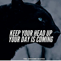 keep your head up: KEEP YOUR HEAD UP  YOUR DAY ISCOMING  THE AWESOME QUOTES