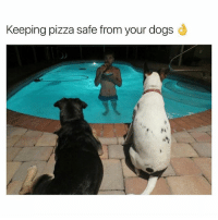 Dogs, Funny, and Life: Keeping pizza safe from your dogs Life hack