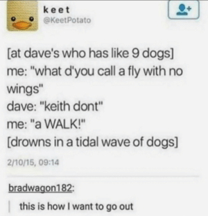 "*distant barking* by the_saddest_one MORE MEMES: keet  @KeetPotato  [at dave's who has like 9 dogs]  me: ""what d'you call a fly with no  wings""  dave: ""keith dont""  me: ""a WALK!""  [drowns in a tidal wave of dogs]  2/10/15, 09:14  bradwagon182:  this is how I want to go out *distant barking* by the_saddest_one MORE MEMES"