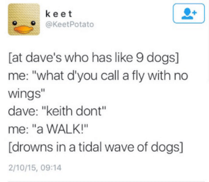 """bradwagon182:  this is how I want to go out : keet  O@KeetPotato  [at dave's who has like 9 dogs]  me: """"what d'you call a fly with no  wings""""  dave: """"keith dont""""  me: """"a WALK!""""  [drowns in a tidal wave of dogs]  2/10/15, 09:14 bradwagon182:  this is how I want to go out"""