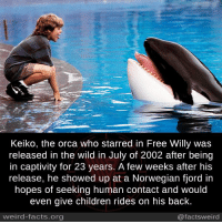Children, Facts, and Memes: Keiko, the orca who starred in Free Willy was  released in the wild in July of 2002 after being  in captivity for 23 years. A few weeks after his  release, he showed up at a Norwegian fjord in  hopes of seeking human contact and would  even give children rides on his back  weird-facts.org  @factsweird