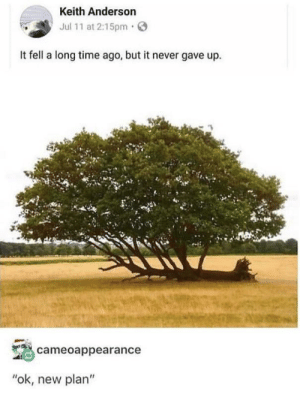 """Http, Time, and Tree: Keith Anderson  Jul 11 at 2:15pm  It fell a long time ago, but it never gave up.  cameoappearance  """"ok, new plan"""" Oddly inspirational tree via /r/wholesomememes http://bit.ly/2MKbZUd"""