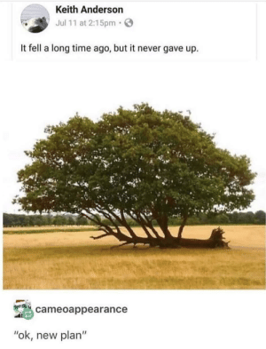 "Never, never give up via /r/wholesomememes https://ift.tt/2OQ7Uyy: Keith Anderson  Jul 11 at 2:15pm  It fell a long time ago, but it never gave up  cameoappearance  ""ok, new plan"" Never, never give up via /r/wholesomememes https://ift.tt/2OQ7Uyy"