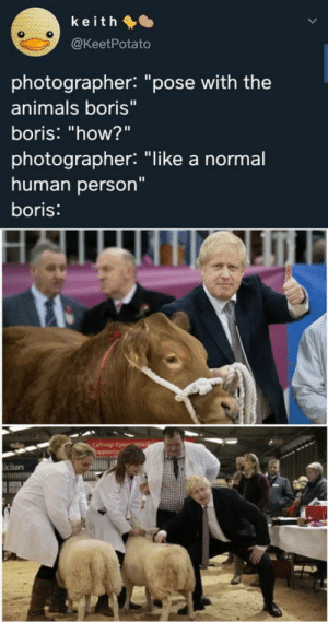 "Boris got no Chill!: keith O  @KeetPotato  photographer: ""pose with the  animals boris""  boris: ""how?""  photographer: ""like a normal  human person""  boris:  Cefnogi Cym  upportin  icitors Boris got no Chill!"