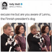 Funny, Presidents, and Boy: Kelly Weill  @KELLYWEILL  excuse me but are you aware of Lennu,  the Finnish president's dog Cutest boy