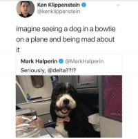 Ken, Memes, and Butterfly: Ken Klippenstein  @kenklippenstein  imagine seeing a dog in a bowtie  on a plane and being mad about  Mark Halperin @MarkHalperin  Seriously, @delta??!? Follow me @antisocialtv @lola_the_ladypug @x__social_butterfly__x @x__antisocial_butterfly__x