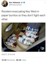 "Ken, Kfc, and Soon...: Ken Webster Jr  @ProducerKen  Roosters evacuating Key West in  paper burritos so they don't fight each  other.  9/8/17, 9:18 AM  14.2K Retweets 36.2K Likes <p><a href=""http://elionking.tumblr.com/post/165153868811/weavemama-shoutout-to-the-person-who-cared-enough"" class=""tumblr_blog"" target=""_blank"">elionking</a>:</p><blockquote> <p><a href=""http://weavemama.tumblr.com/post/165131869998/shoutout-to-the-person-who-cared-enough-to-save"" class=""tumblr_blog"" target=""_blank"">weavemama</a>:</p> <blockquote><p>shoutout to the person who cared enough to save the burrito bird bois from a major hurricane</p></blockquote>  <p>They trash talking in this pic. One of them just said ""you better be gladd i'm wrapped up like this. Soon as they let me out you a KFC meal i swear on my momma""</p> </blockquote>"