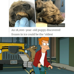 awesomesthesia:  That was a sad episode: Kennedy News  An 18,000-year-old puppy discovered  frozen in ice could be the 'oldest  1lIi  RDS 209 awesomesthesia:  That was a sad episode