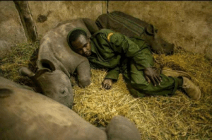 Soldier, Poachers, and Protect: Kenyan soldier was asked to protect rhinos from poachers