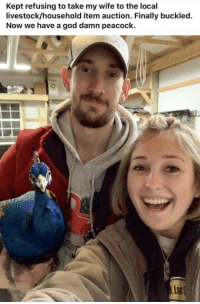 God, Peacock, and Wife: Kept refusing to take my wife to the local  livestock/household item auction. Finally buckled.  Now we have a god damn peacock. Peacock