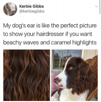 I'd like spaniel ear fur please. Just hold the wet dog smell. Pup @kerbiegibbs: Kerbie Gibbs  @kerbiegibbs  My dog's ear is like the perfect picture  to show your hairdresser if you want  beachy waves and caramel highlights I'd like spaniel ear fur please. Just hold the wet dog smell. Pup @kerbiegibbs