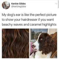 sllllwep: Kerbie Gibbs  @kerbiegibbs  My dog's ear is like the perfect picture  to show your hairdresser if you want  beachy waves and caramel highlights sllllwep