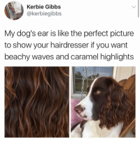 *prints out this tweet and takes to the salon* (@kerbiegibbs on Twitter): Kerbie Gibbs  @kerbiegibbs  My dog's ear is like the perfect picture  to show your hairdresser if you want  beachy waves and caramel highlights *prints out this tweet and takes to the salon* (@kerbiegibbs on Twitter)