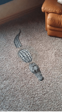 Tumblr, Alligator, and Blog: kermakastikeritari: starkeaton:  starkeaton: Hey get out of there noclip is strictly prohibited in my home    #interior crocodile alligator