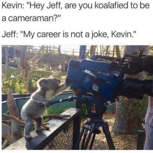"""Memes, My Career, and Back: Kevin: """"Hey Jeff, are you koalafied to be  a cameraman?'  Jeff: """"My career is not a joke, Kevin."""" Dm to exactly 6 people for a follow back!"""