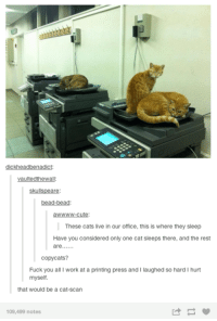 Memes, 🤖, and Cat: kh  vaultedthewalle  skulls  are  bead-bead  awWWW-cute:  These cats live in our office, this is where they sleep  Have you considered only one cat sleeps there, andthe rest  are  copycats?  Fuck you all I work at a printing press and I laughed so hard I hurt  myself.  that would be a cat-Scan  109,499 notes