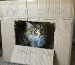Khajiit, Khajiit-Has-Wares, and Wares: Khajiit has wares