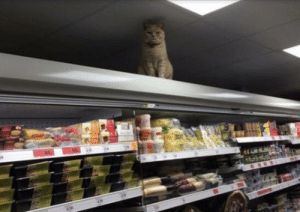 Khajiit has wares if you have coin: Khajiit has wares if you have coin