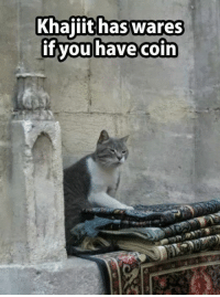 Grumpy Cat, Waring, and  Coin: Khajiit has wares  if you have coin