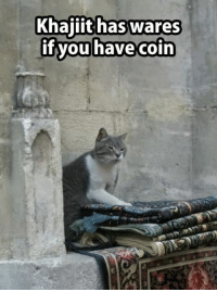 Memes, 🤖, and Waring: Khajiit has wares  if you have coin