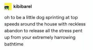 : kibibarel  oh to be a little dog sprinting at top  speeds around the house with reckless  abandon to release all the stress pent  up from your extremely harrowing  bathtime