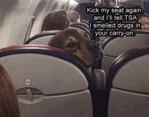 Hey chill bruh!: Kick my seat again,  and I'll tell TSA  I smelled drugs in  your carry-on. Hey chill bruh!
