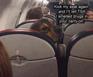 I dare you: Kick my seat again  and I'll tell TSA  smelled drugs in  your carry-on I dare you