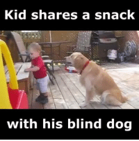 Dank, Adorable, and 🤖: Kid Shares a Snack  with his blind dog Type 'YES' if you think this is ADORABLE!