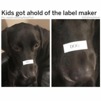Funny, Lol, and Reddit: Kids got ahold of the label maker  Pic: reddit u/Bobby RockPort  @DrSmashlove  DOG  DOG Kids are so annoying lol