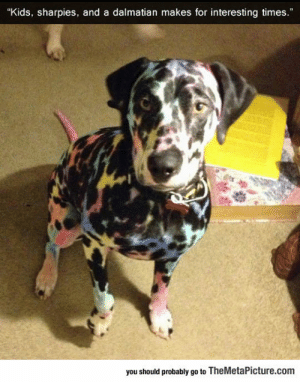 """srsfunny:Colorful Dog: """"Kids, sharpies, and a dalmatian makes for interesting times.""""  you should probably go to TheMetaPicture.com srsfunny:Colorful Dog"""