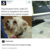 Follow me @antisocialtv @lola_the_ladypug @x__social_butterfly__x @x__antisocial_butterfly__x: KILA  OKTLA  KTLA  Dog escapes home, walks 20  blocks to hospital to find owner  recovering from cancer surgery  mazmoney  what did humans do to deserve dogs  Source: cuntographer Follow me @antisocialtv @lola_the_ladypug @x__social_butterfly__x @x__antisocial_butterfly__x