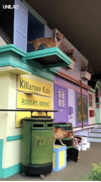 Dank, Animal, and Best: Killarney Kafe  sstant Ware This animal show is the best thing I have ever seen... I NEED to see this live! 😮🙌