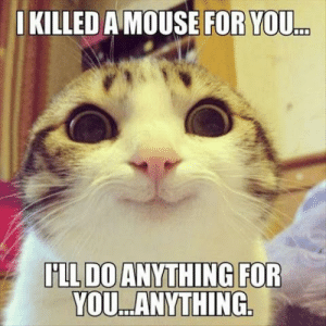 30 Funny Animal Memes | QuotesHumor.com: KILLED A MOUSE FOR YOU  LL DO ANYTHING FOR  YOU.ANYTHING. 30 Funny Animal Memes | QuotesHumor.com