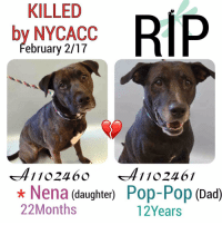 DeathrowDogs RIP🌹 NY DOGS adopt rescue foster SaveALife surrenders strays NoChance Killed Euthanized Senior Baby* Shameful InnocentVictims Heartbreaking NOKill February022017 07DEAD TheyMattered Pray4Change AsinineExcuses DidNotDeserveThis . REASONS THEY WERE KILLED BY NYCACC WERE ~ . . • NENA - A1102460 - *BABY 22MONTHS - OWNER EVICTED - RescueOnly - Manhattan - Shy-Friendly-Playful and Affectionate. NENA was Fearful and Avoidant of her Peers 😰💔😢 Surrendered with her Dad POP-POP.💔 . • POP-POP - A1102461 - SENIOR 12YEARS - OWNER EVICTED - RescueOnly - Manhattan - A Friendly-Tolerant-Mellow-Playful-Affectionate and Respectful Senior Boy ☺️💔😢Surrendered with his Daughter NENA.💔 . BOTH DAD AND DAUGHTER WERE LISTED FOR JUST ONE NIGHT ONLY‼️ 💔NO ONE CAME FORWARD TO HELP THEM 😢💔 . GOD BLESS THE INNOCENT VICTIMS 🙏🏻💓 . ▶️ CHANGE.ORG PETITION IN MY BIO FOR GOVERNOR OF NYC TO STOP THE KILLINGS ~ 🙏🏻PLEASE BE THEIR VOICES AND SIGN!!!: KILLED  RIP  by NYCACC  ebruary 2/17  1102460 41102461  Nena (daughter)  Pop-Pop  (Dad)  22 Months  12Years DeathrowDogs RIP🌹 NY DOGS adopt rescue foster SaveALife surrenders strays NoChance Killed Euthanized Senior Baby* Shameful InnocentVictims Heartbreaking NOKill February022017 07DEAD TheyMattered Pray4Change AsinineExcuses DidNotDeserveThis . REASONS THEY WERE KILLED BY NYCACC WERE ~ . . • NENA - A1102460 - *BABY 22MONTHS - OWNER EVICTED - RescueOnly - Manhattan - Shy-Friendly-Playful and Affectionate. NENA was Fearful and Avoidant of her Peers 😰💔😢 Surrendered with her Dad POP-POP.💔 . • POP-POP - A1102461 - SENIOR 12YEARS - OWNER EVICTED - RescueOnly - Manhattan - A Friendly-Tolerant-Mellow-Playful-Affectionate and Respectful Senior Boy ☺️💔😢Surrendered with his Daughter NENA.💔 . BOTH DAD AND DAUGHTER WERE LISTED FOR JUST ONE NIGHT ONLY‼️ 💔NO ONE CAME FORWARD TO HELP THEM 😢💔 . GOD BLESS THE INNOCENT VICTIMS 🙏🏻💓 . ▶️ CHANGE.ORG PETITION IN MY BIO FOR GOVERNOR OF NYC TO STOP THE KILLINGS ~ 🙏🏻PLEASE BE THEIR VOICES AND SIGN!!!