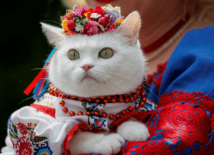 Tumblr, Blog, and Http: killing-the-prophet:A woman dressed in a traditional Ukrainian embroidered shirt holds her cat as she take part in an embroidered shirt parade in central Kiev, Ukraine, on May 27, 2017.Gleb Garanich