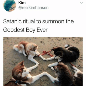 A summoning ritual by tristan10000 FOLLOW HERE 4 MORE MEMES.: Kim  @realkimhansen  Satanic ritual to summon the  Goodest Boy Ever A summoning ritual by tristan10000 FOLLOW HERE 4 MORE MEMES.