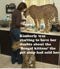 Memes, Bengals, and 🤖: Kimberly was  starting to have her  doubts about the  Bengal kittens, the  pet shop had sold her.