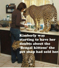 Memes, Bengals, and Pets: Kimberly was  starting to have her  doubts about the  Bengal kittens' the  pet shop had sold her :D