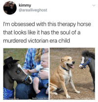 😂Wth: kimmy  @arealliveghost  I'm obsessed with this therapy horse  that looks like it has the soul of a  murdered victorian era child  ure Therapy Horses  Gentle Carousel Miniat  Heres Centle Carousel Minntu 😂Wth