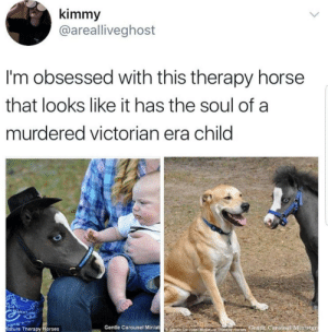 Never thought a tiny horse could look so spooky. by RennBear FOLLOW 4 MORE MEMES.: kimmy  @arealliveghost  I'm obsessed with this therapy horse  that looks like it has the soul of a  murdered victorian era child  Gentle Carousel Miniat  entie Carouseiiniature Therax Horses Gentle Carousel Miniatur  iature Therapy Horses Never thought a tiny horse could look so spooky. by RennBear FOLLOW 4 MORE MEMES.