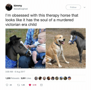 Tom Saddler: kimmy  Follow  @arealliveghost  I'm obsessed with this therapy horse that  looks like it has the soul of a murdered  victorian era child  aenite Carouse Mnicure Tiaany hores Gentle Carousel Miniature Therap  se Miniature Therapy Horses  Gentle Carousel Miniatur  3:09 AM - 6 Aug 2017  1,235 Retweets 3,051 Likes  17 1.2K  23  3.1K Tom Saddler